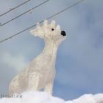 Proud reindeer.