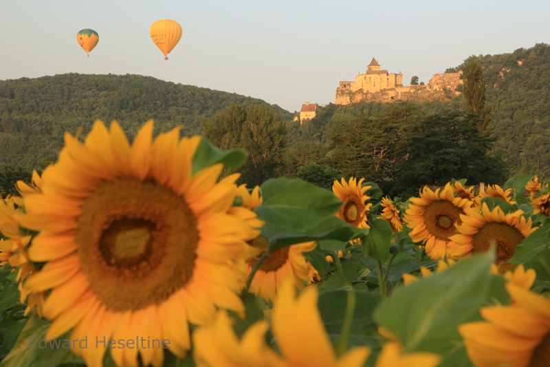 Sunflowers,Chateau de Castelnaud and Hot air balloons-2