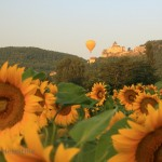 Sunflowers, Chateau de Castelnaud and hot air balloons-3