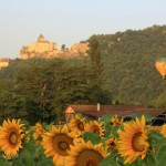 Sunflowers, Chateau de Castelnaud and hot air balloons.-4