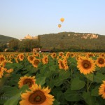 Sunflowers, Chateau de Castelnaud and hot air balloons-5