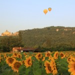 Sunflowers, Chateau de Castelnaud and hot air balloons-6